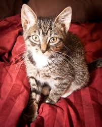 musings of a feline foster dad thoughts and ideas inspired by cats