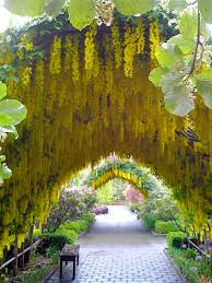 Wisteria Home Decor by Images About Beautful Garden Design On Pinterest Beautiful Gardens
