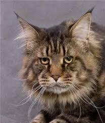 Візьми 100 тисяч у банку - купи кота - images?q=tbn:ANd9GcSe9v7