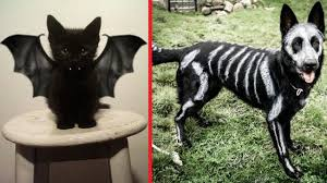 creative halloween costumes for pets u203f youtube