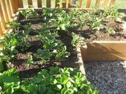 raised bed vegetable garden layout plans design a vegetable garden