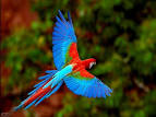 Birds and Animals Awesome Photos (2) | The Best Travel Photos