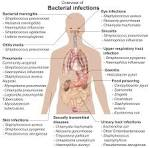File:<b>Bacterial infections</b> and