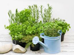how to grow herbs indoors and outdoors food network healthy