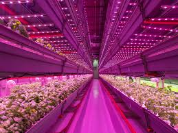how leds are making weed better cannabis revolution and indoor