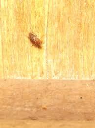 bug eric scuttle flies
