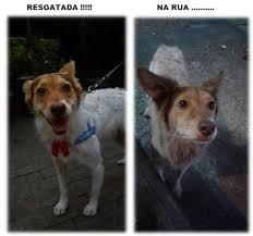 Cadela resgatadas das ruas espera por uma chance em Taboão da ...