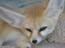 Bambi's Workshop {1/3} Images?q=tbn:ANd9GcSjr5x3ee37fdMS6aMma00wqjr38uChhuF3iA8UHQmSJ3djz10t8g