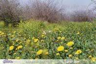 فصل الربيع Images?q=tbn:ANd9GcSk1nUocAwksoAgzFM1mU6duANJbum_iTIJ__pl5XioEsFExqt9UKfwVZXiPg