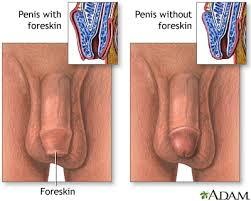 foreskin penis|Wikimedia Commons