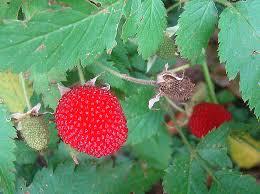 West Indian Raspberry