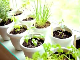 furniture adorable amazing diy indoor herbs garden ideas herb
