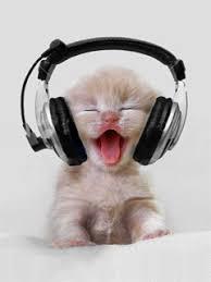 gatinho escutando música