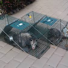How Do You Get Rid Of Possums In The Backyard by 24 7 Wildlife Control How To Get Rid Of Opossums
