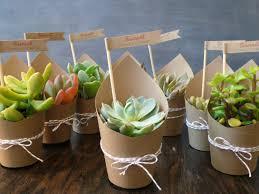 Succulents Pots For Sale by Diy Succulent Favor Mini Succulent Party Favor But With Navy