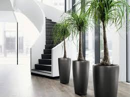 Home Decorating Store Home Decor Interior Wonderful Design Modern Indoor Plants
