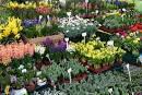 Προμήθεια φυτών / ΚΗΠΟΣ-ΒΕΡΑΝΤΑ-ΜΠΑΡΜΠΕΚΙΟΥ / Εξωτερικός χώρος ...