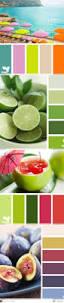 best 25 color palettes ideas on pinterest color pallets