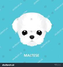 vector illustration portrait maltese puppy art stock vector