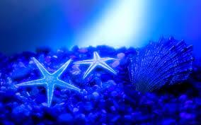 صور الطبيعه تحت الماء  Images?q=tbn:ANd9GcSsKn5cMm3HHOAXWcWC-VAexjawmxGMjHdeOR0FOeZpcOzhzs9t