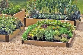 Planning A Raised Bed Vegetable Garden by Growing Vegetable Gardens Raised Beds