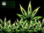 Media | 420 Kingston