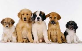 Feira de Adoção de Animais é transferida em Ijuí ( RS)