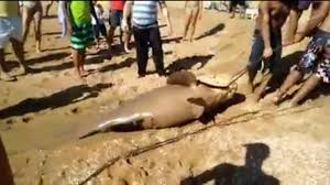 Prefeitura encaminha denúncia ao Ibama de pesca ilegal de peixe ...