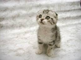 So cute!!!!!!!