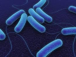Ayo Mengenal Bakteri Lebih Dekat