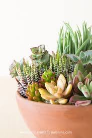 tips on how to grow succulents outdoors succulents u0026 sunshine