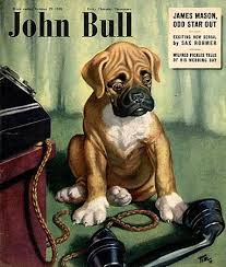 boxer dog uk 42 best vintage boxers images on pinterest boxers boxer dogs