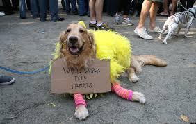 Winnie Pooh Dog Halloween Costume 21 Pet Costumes Convince Pet Asap 6