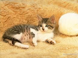 صور قطط تدحك,صور قطط,صور قطط جميلة,صور قطط حلوه Images?q=tbn:ANd9GcSw_YIfGqn89J3jAz5-1egQ04JFctalth9STXq4i4mohOqi7R3J