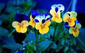 வால்பேப்பர்கள் ( flowers wallpapers ) - Page 3 Images?q=tbn:ANd9GcSx5TcqDxH_FHxuX2BbjlC-kFmlWOhqLUSzBoAAskASTHZqtMHXrw