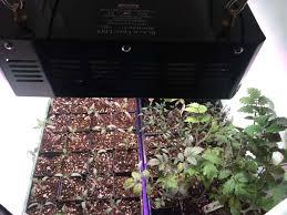 sowing seeds indoors led vegetable garden
