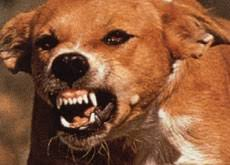 داء الكلب في صور  Images?q=tbn:ANd9GcSz61KeEmkLhPBQzrFYDpxtawwa-J8QbEcQ8uJI3NiWHnP1RpUe