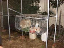 cage racks inspired by your pvc rabbit hutch plans