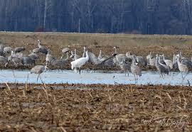 endangered species whooping crane conservation association