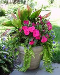 46 best gardening images on pinterest gardening pots and