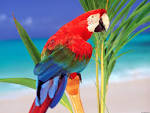 Animals Wallpapers Birds Desktop Backgrounds (wallpapers DesktopWallpaper Animals Birds tropical colors parrot normal Backgrounds arts 1600x1200)
