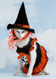 Kitten Costumes Halloween 10 Halloween Safety Tips Cat Catster