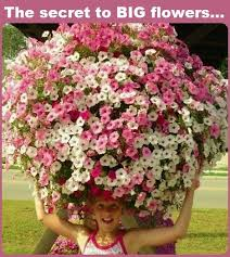 31 best spilled flower pot ideas images on pinterest flower pots