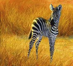 zebra sound