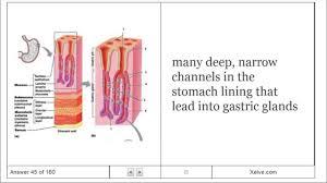 digestive system human anatomy gallery human anatomy image