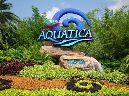 seaworld black friday deals 69 best sea world and discovery cove images on pinterest orlando