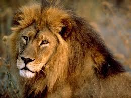 États-Unis : du lion servi dans un restaurant Images?q=tbn:ANd9GcT2nUQOv5Tzu0iq1GIpMBxYUZyCa2y-bMq8GsXStMD8MwnPoHto