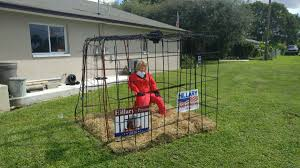 cape coral yard display depicts hillary clinton in prison for