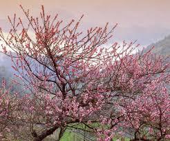 Có một mùa xuân đất nước trong thơ…