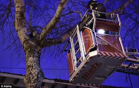 Image result for Cats stuck up the tree . firefighters